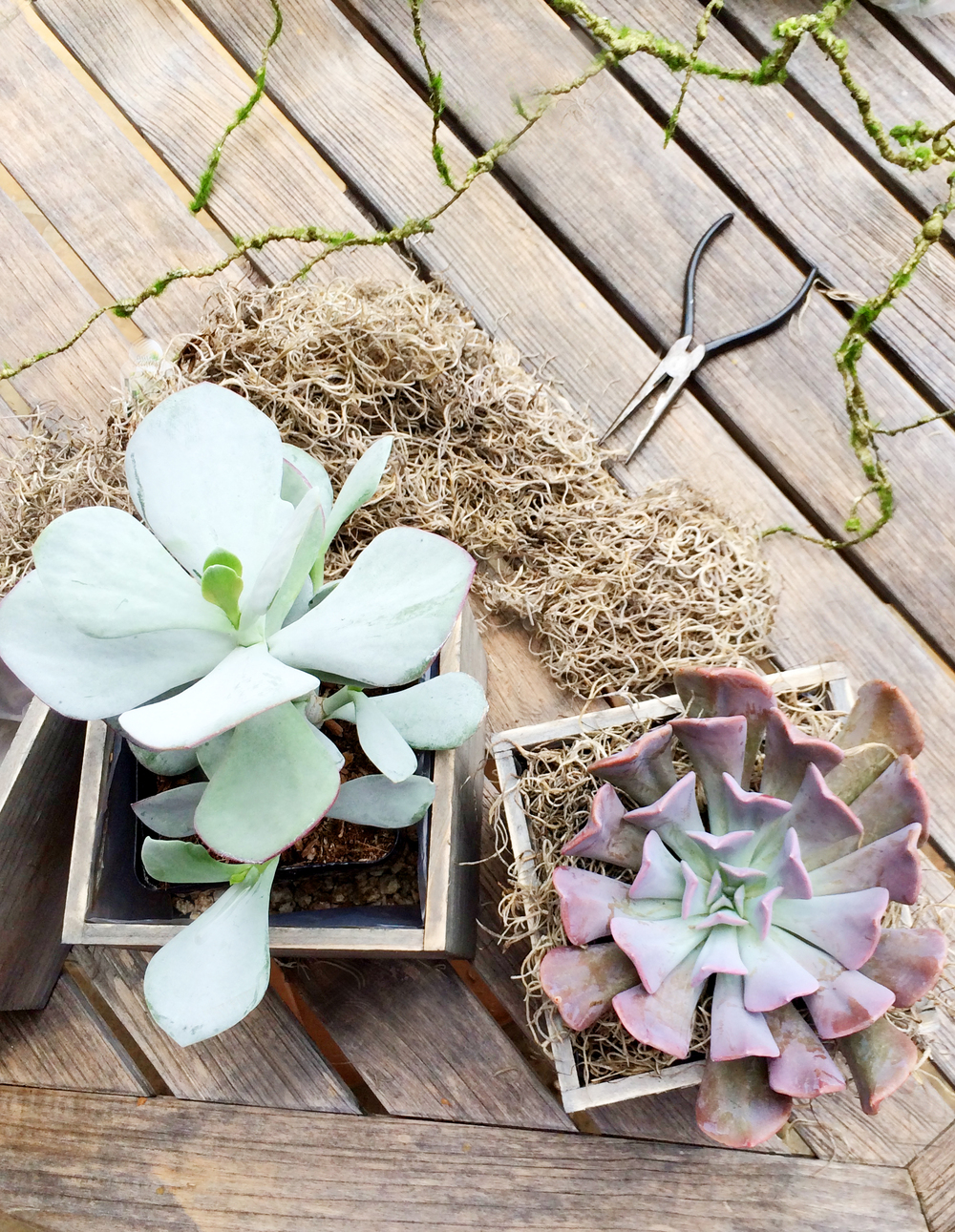 DIY Succulent Table Centerpiece | mysplendidliving.com