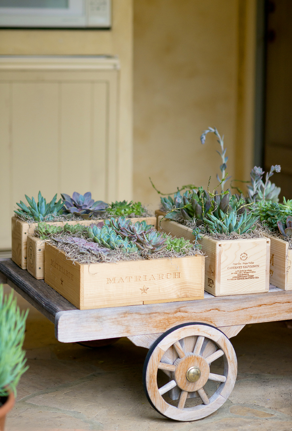 DIY Succulent Centerpieces! See how to make these fun summer succulent boxes for your next party! | mysplendidliving.com