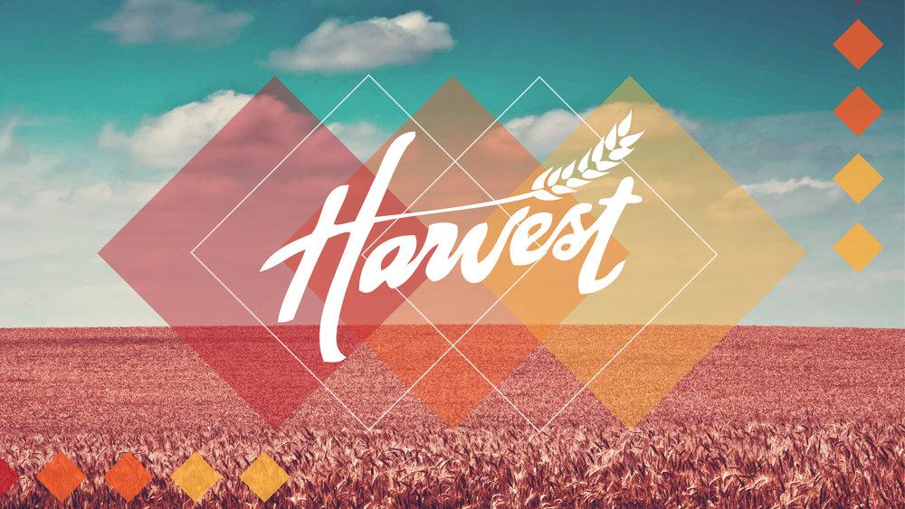 Harvest Series-01.jpg