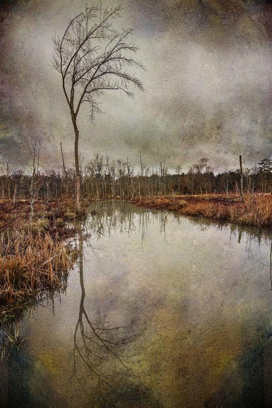 Ebenezer Swamp #2