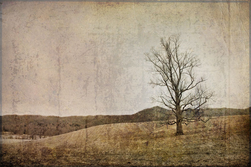 Lone Tree in Cades Cove