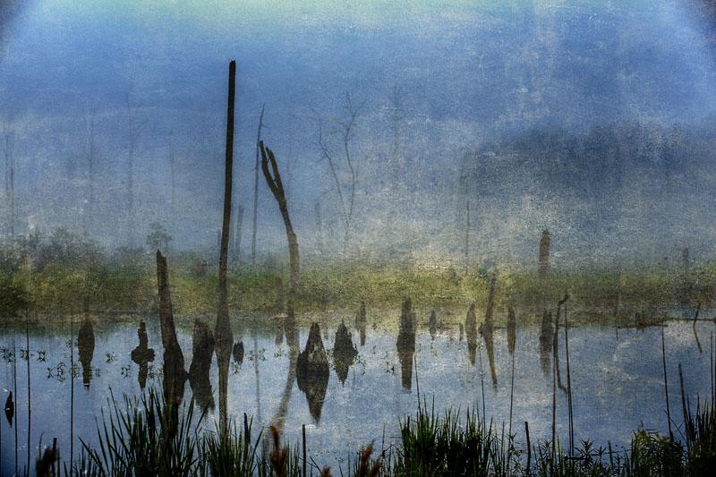 Swamp #1
