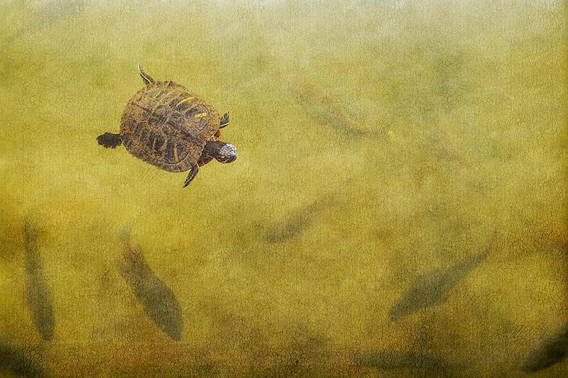 Turtle #1