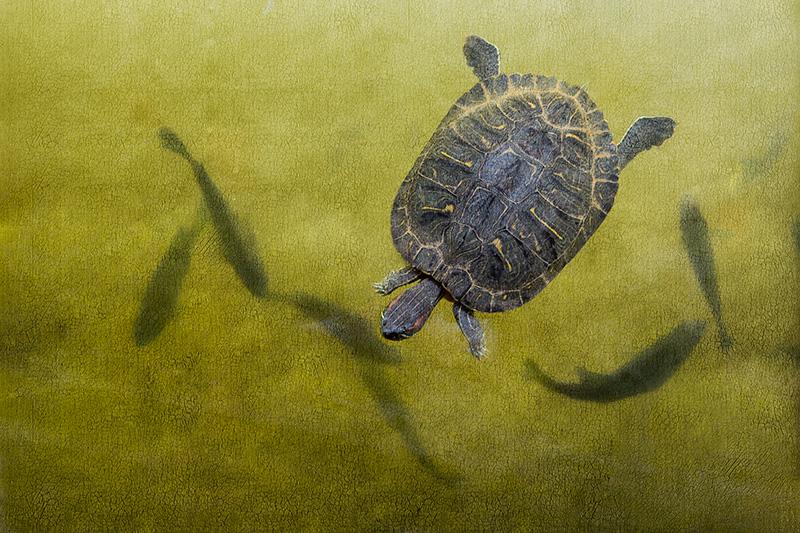 Turtle #4