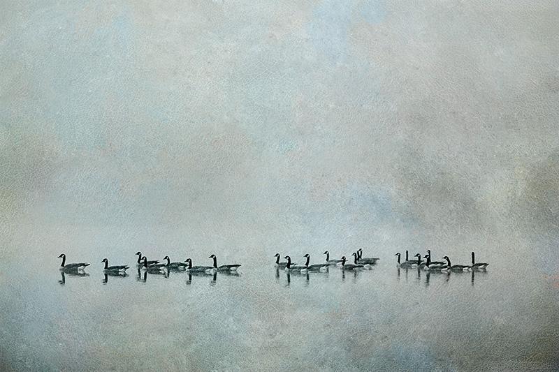 Geese in Fog #1