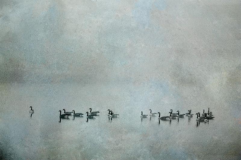 Geese n Fog #2