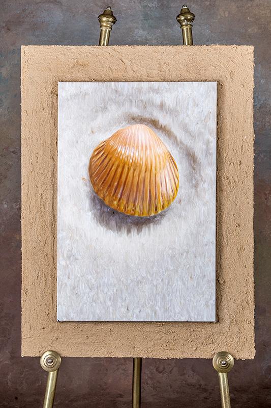sand-shell.jpg
