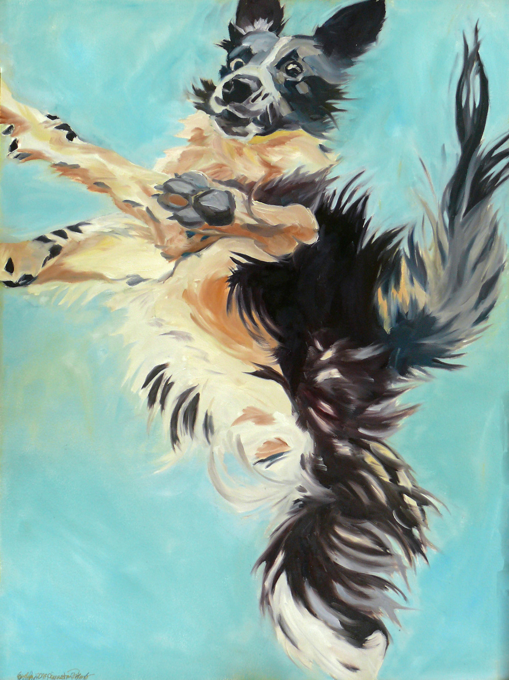 Let's Fly Border Collie Portrait