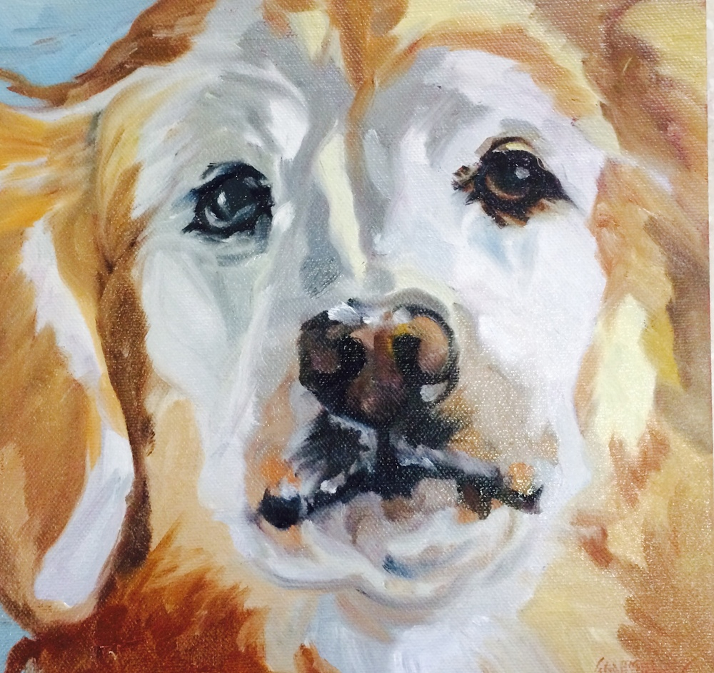 Jemma the Golden Retriever