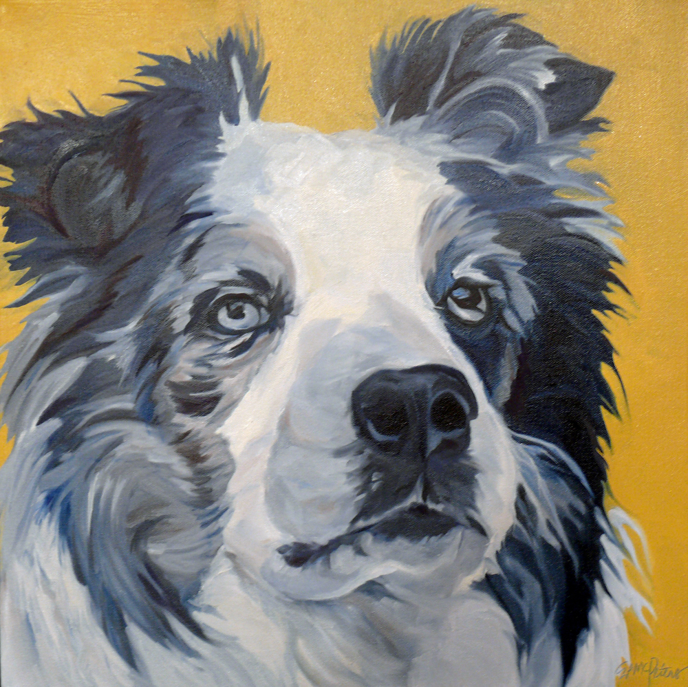 Belle the Border Collie