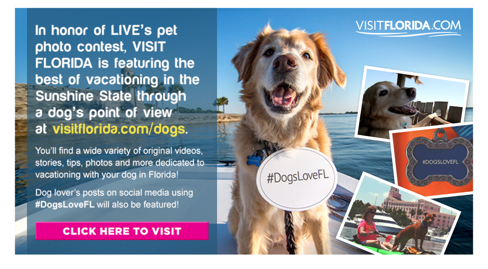 Enter to Win a $10,000 Trip and Share Photos and Videos of Your Dog Using #DogsLoveFL - click on the photo to learn more!