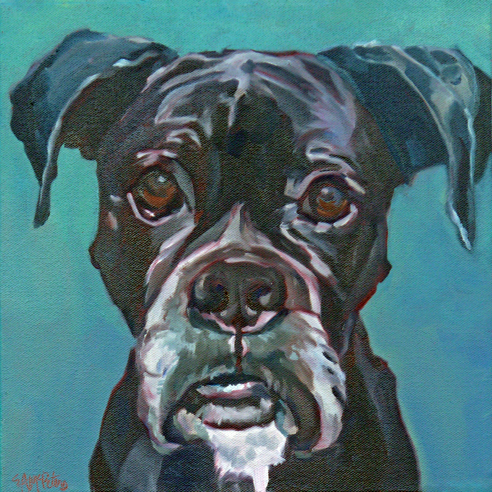 Sable the Black Boxer Dog