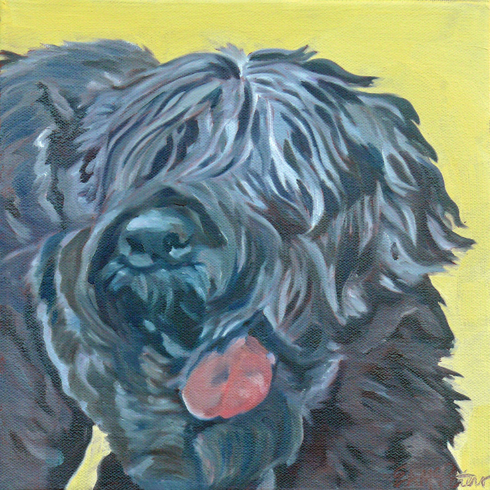 Sergey the Black Russian Terrier