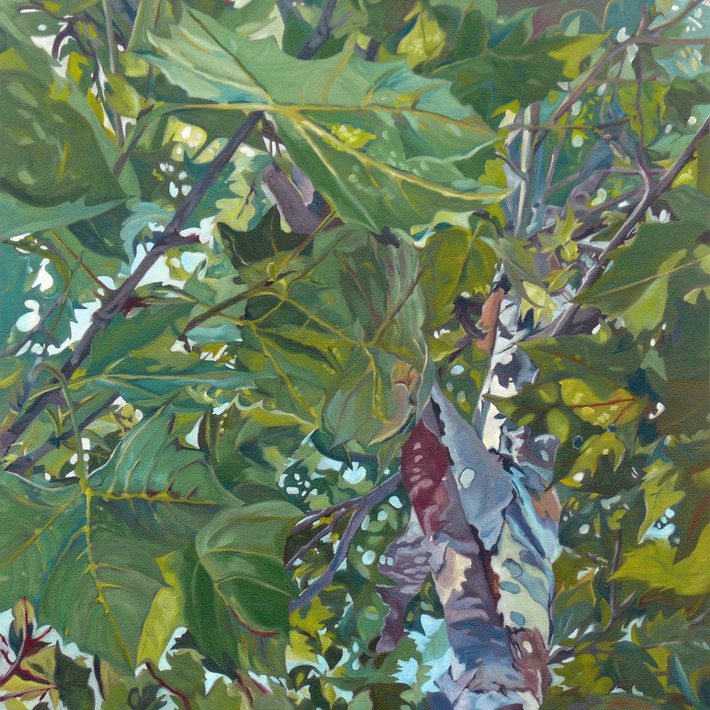 Summer Sycamore #6 Evelyn McCorristin Peters 1500.jpg