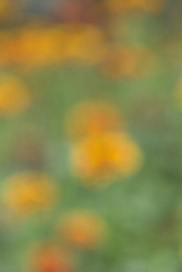 070923_DSC0052--abstract.jpg