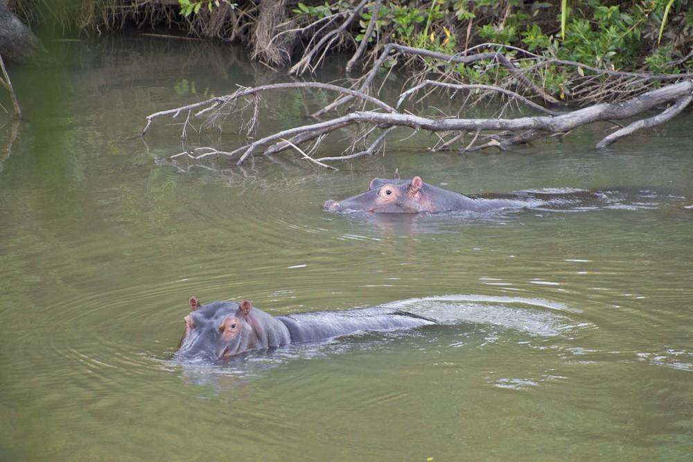 130420_DSC3077 Hippos_1.jpg