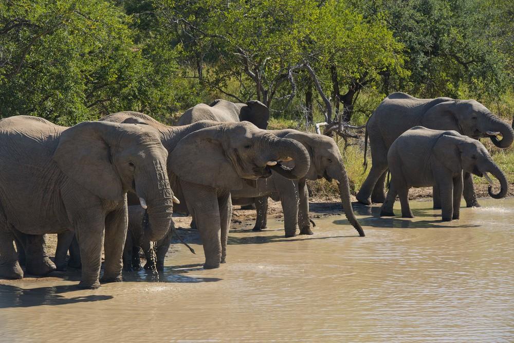 130420_DSC3324 Elephant Herd Detail.jpg