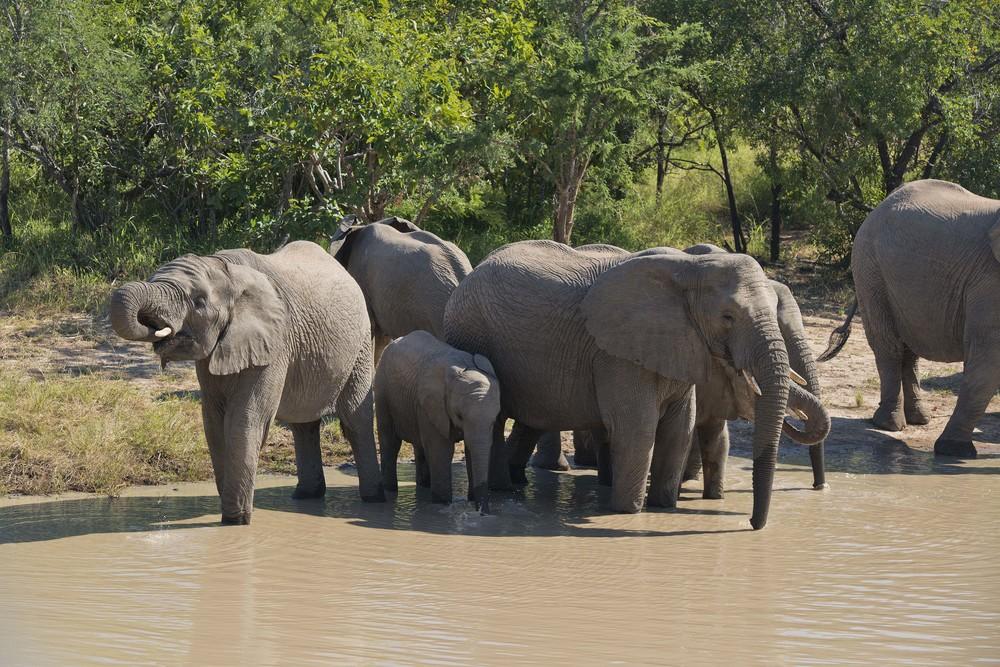 130420_DSC3332 Elephant Herd Detail.jpg