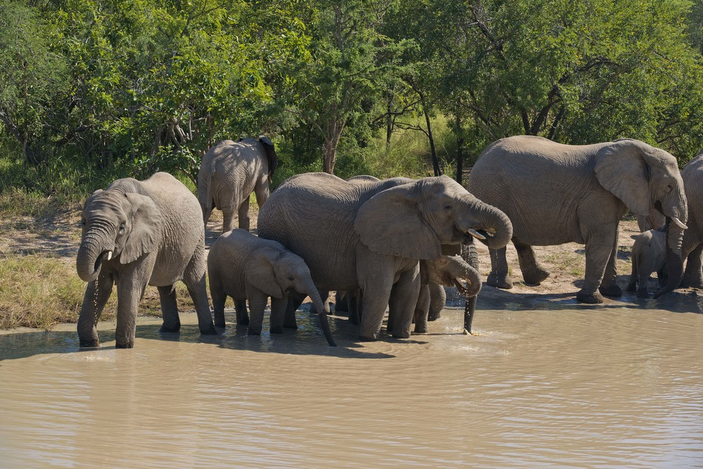 130420_DSC3334 Elephant Herd Detail.jpg