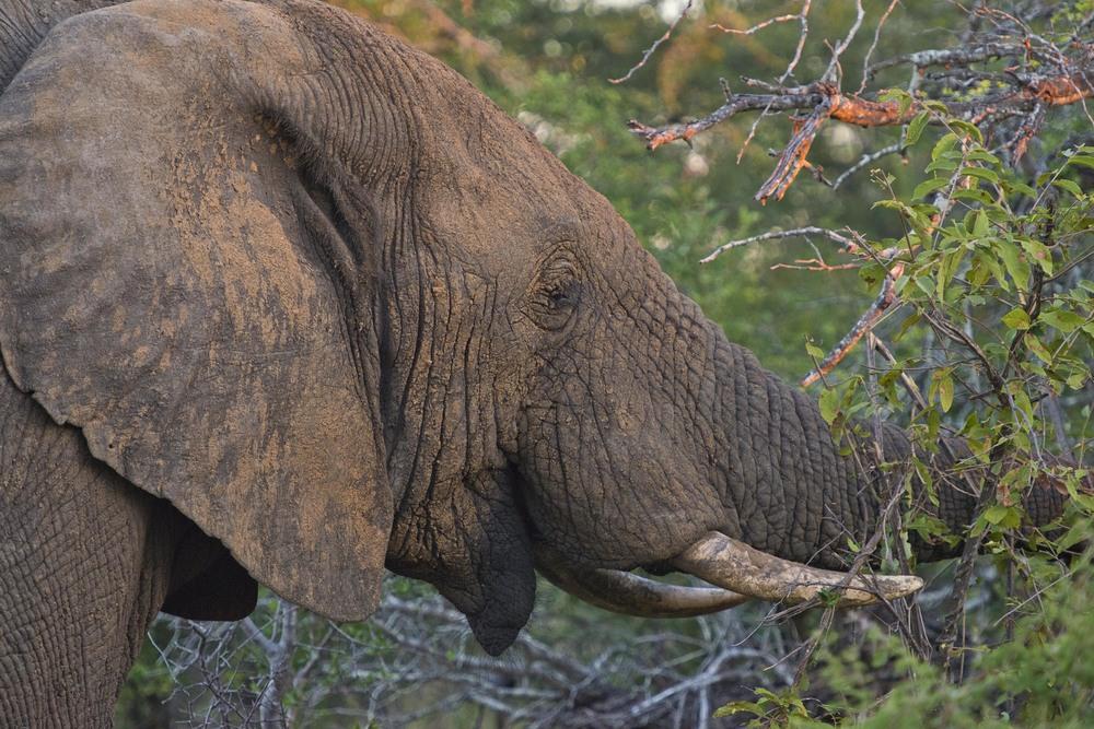 130420_DSC3418 Elephant.jpg
