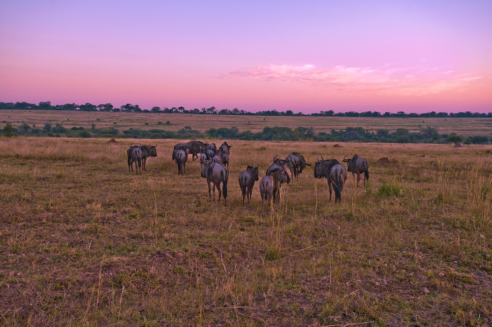 130420_DSC4351-1 Wildebeest at Sunset.jpg
