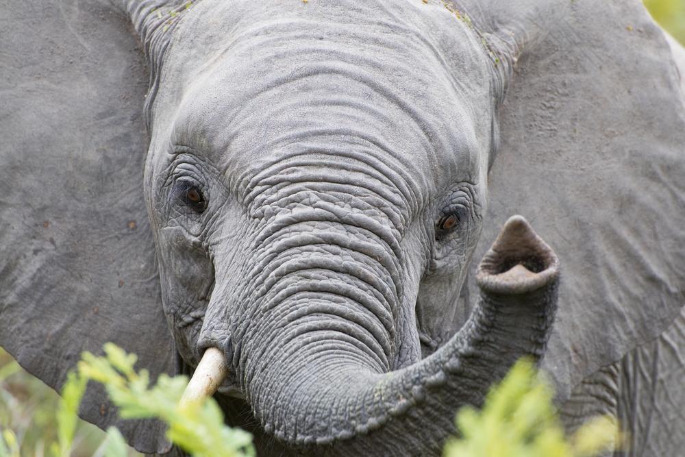 130420_DSC4372 Elephant.jpg
