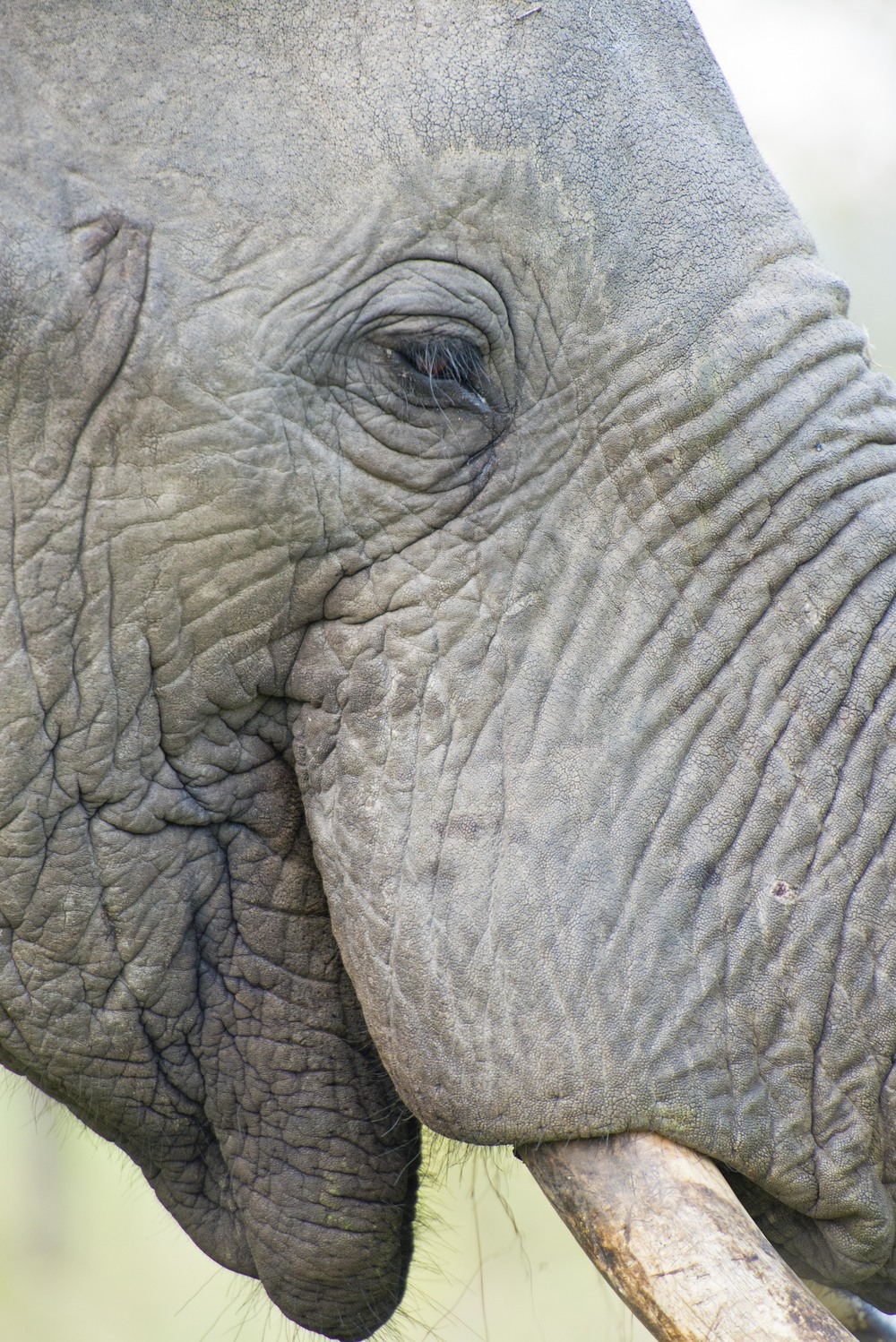 130420_DSC4521 Remarkable Elephant Portrait.jpg