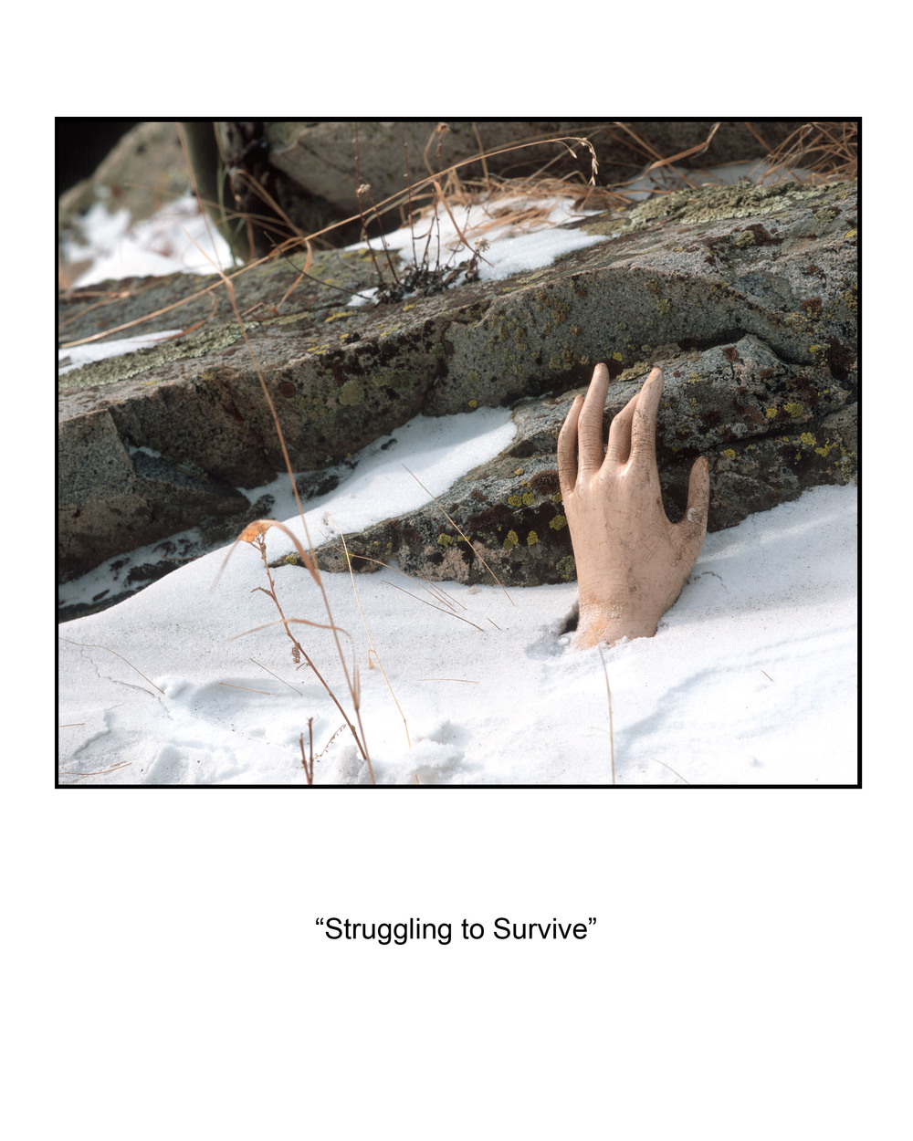 13 The Struggle to Survive.jpg