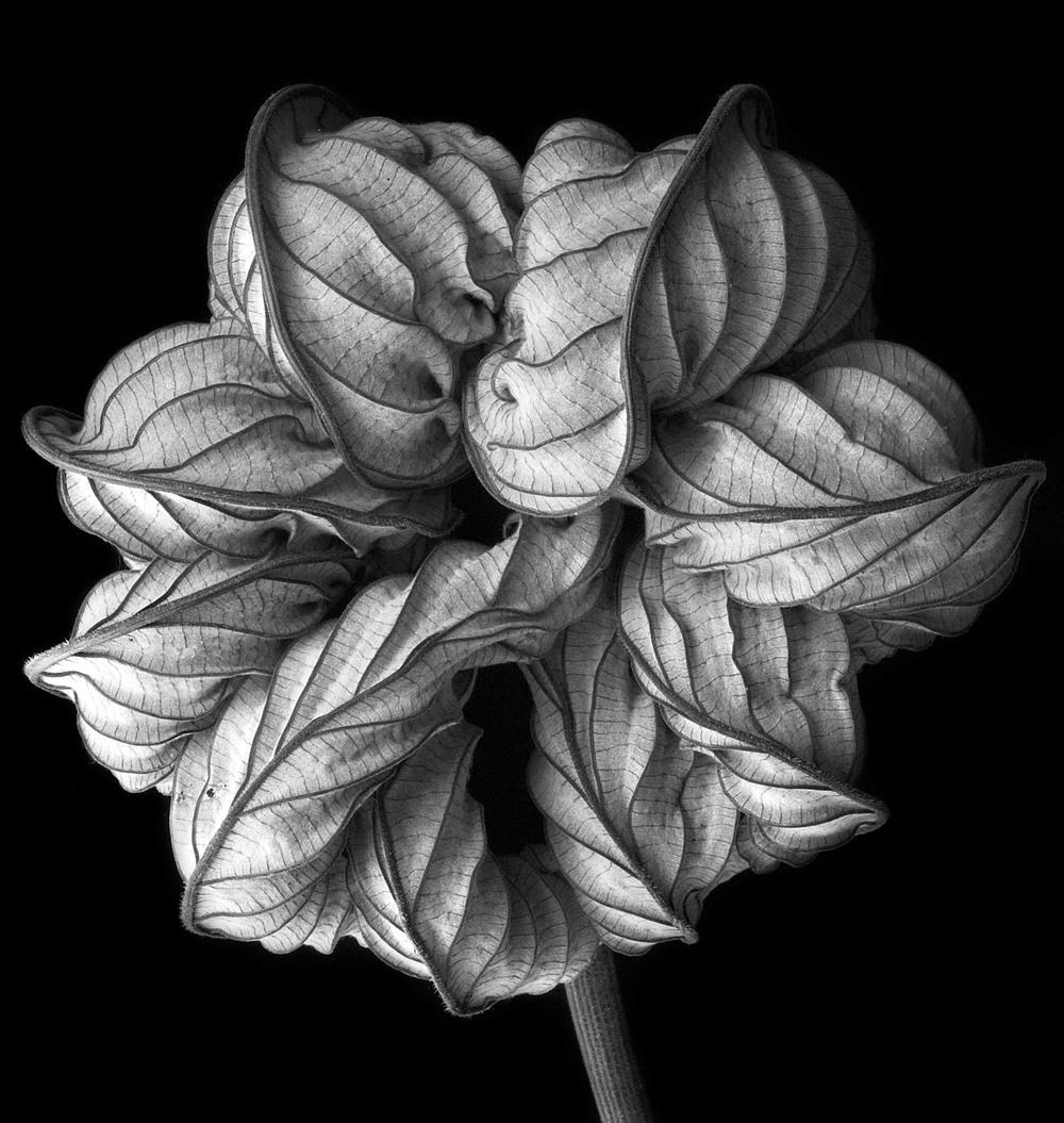 070322_DSC0014 leaf 2.jpg