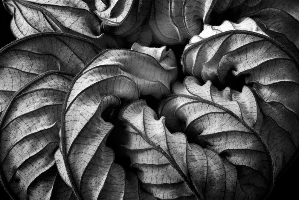 070322_DSC0061 leaf 4.jpg