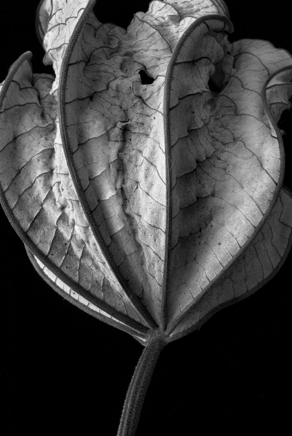 070322_DSC0073 leaf 9.jpg