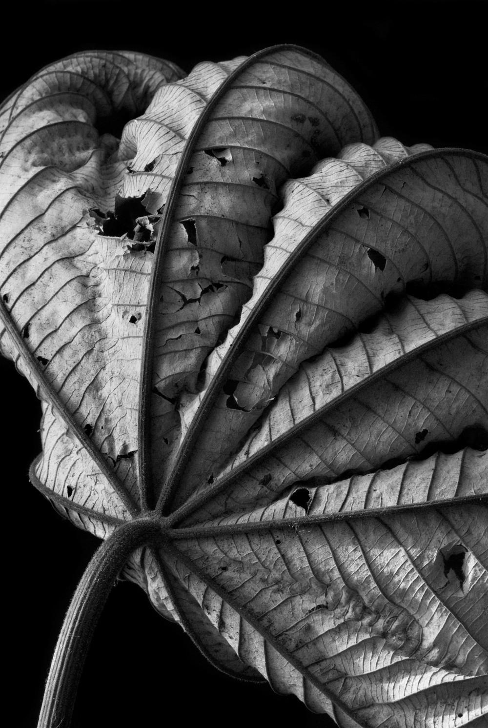 070322_DSC0077 Leaf 8.jpg