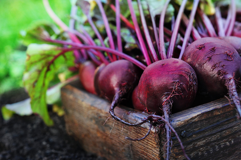 Beetroot and Beet Greens Nutrition and Health Benefits.jpg