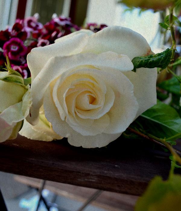 White Rose from Rustic Arrangement : Lilt Blog