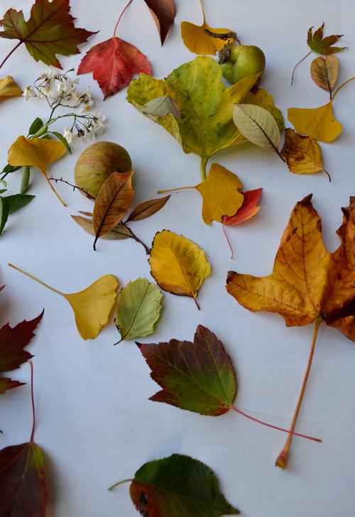 Fall-Fern & Fog