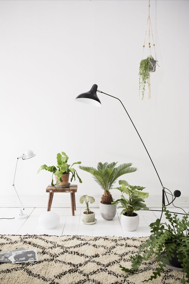 inspiring indoor greens