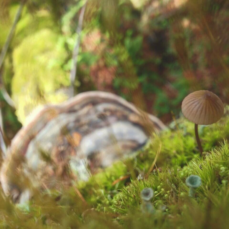 Wild California Mushrooms