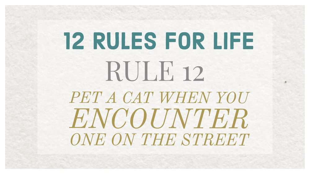 12 rules pet cat street
