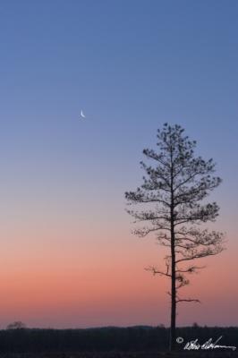 """""""Crescent Moon"""""""