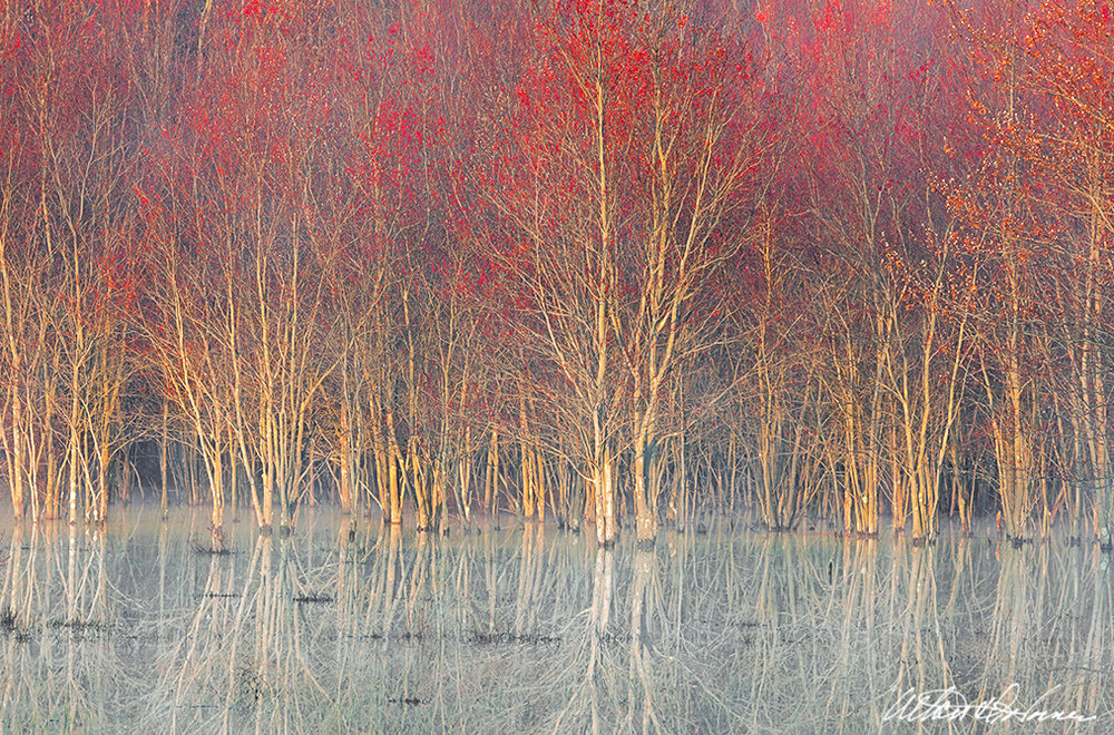 """Flooded Maples""  - (A,E,F)"