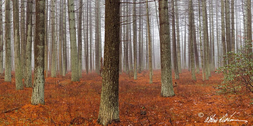 """Pine Grove""  - (D)"