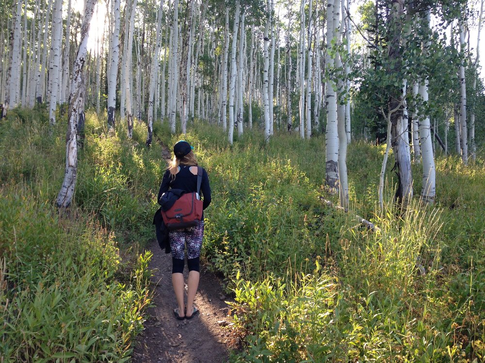 Medicine Walk through aspen forest, Wasatch Mountains