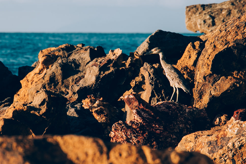 Antigua-9.jpg