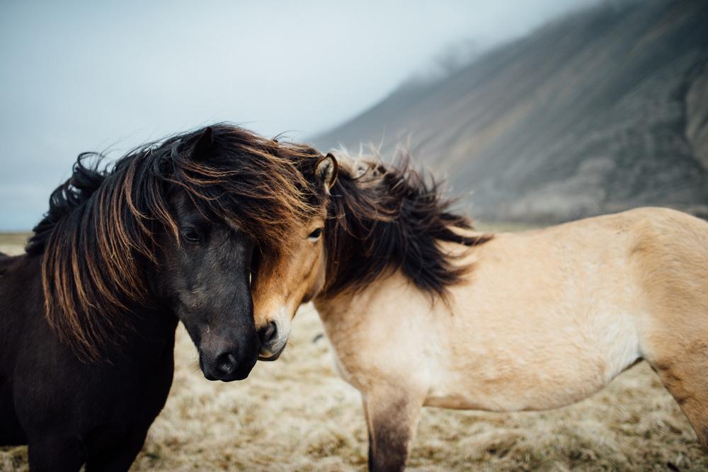 Iceland-135.jpg