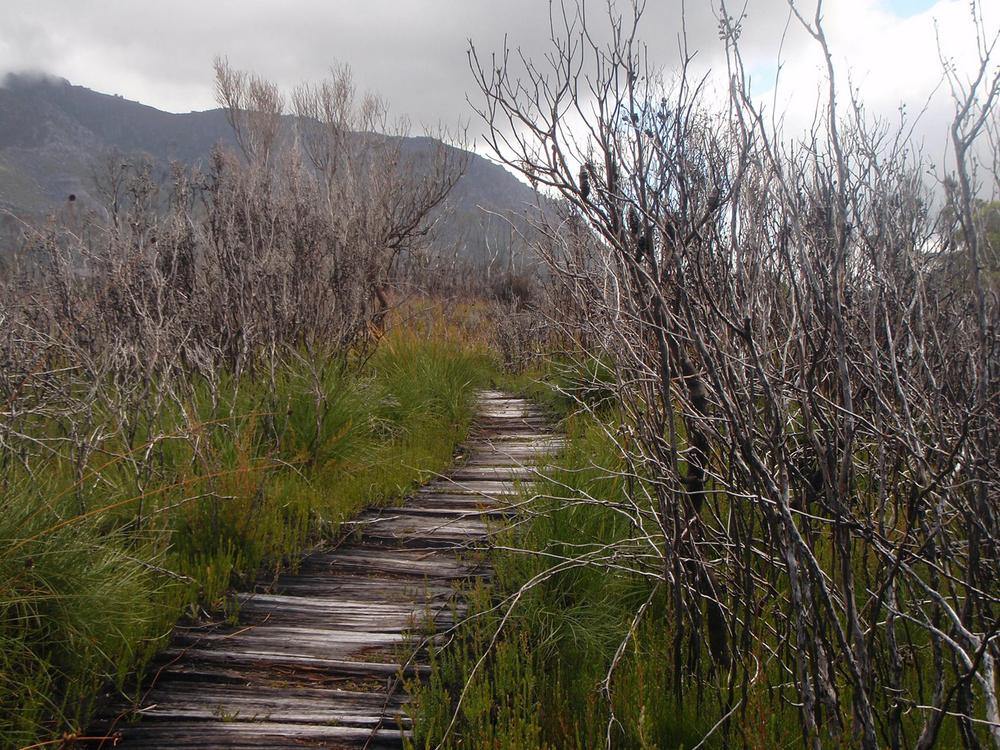 Wood Walk.JPG