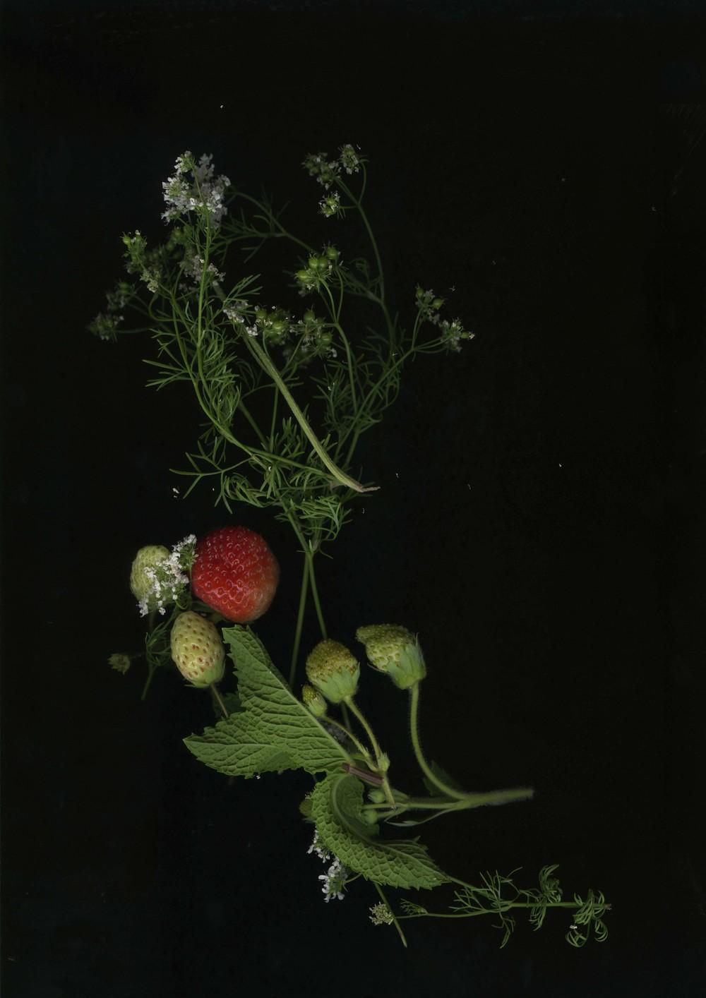 strawberries_1.jpg