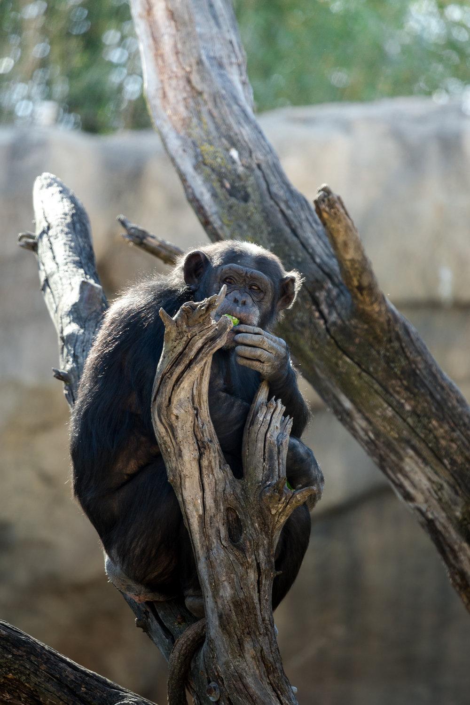StLouis-Zoo-040316-130.jpg