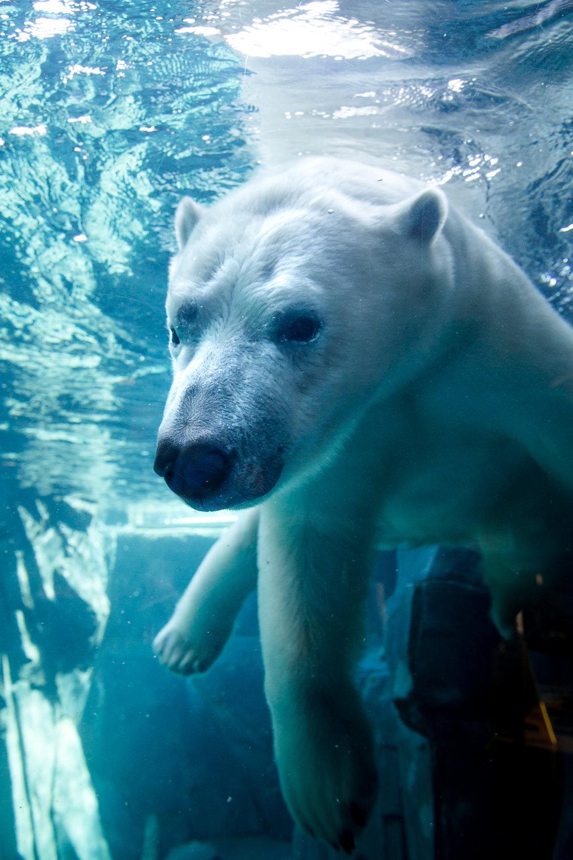 StLouis-Zoo-040316-060.jpg
