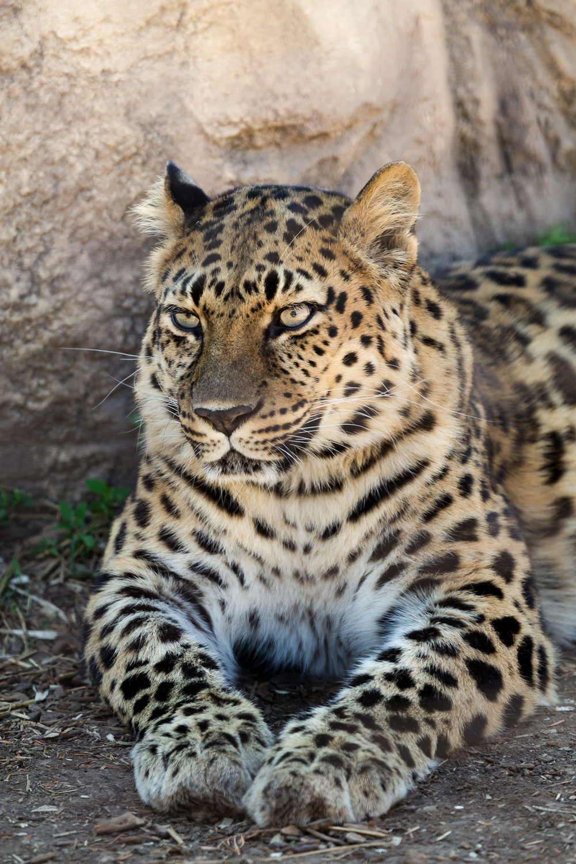 StLouis-Zoo-040316-196.jpg