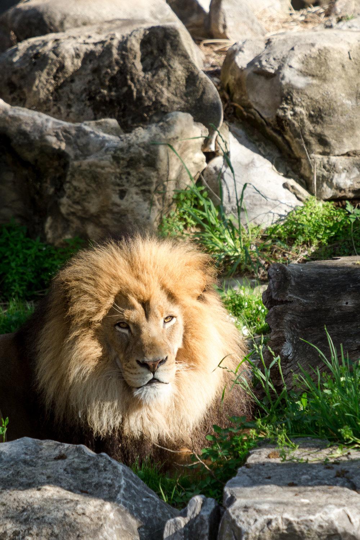 StLouis-Zoo-TB-042316-145.jpg